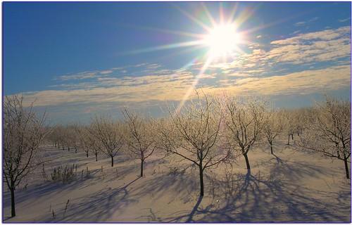 February Morning in Leelanau by Bean in Sylvan Lake