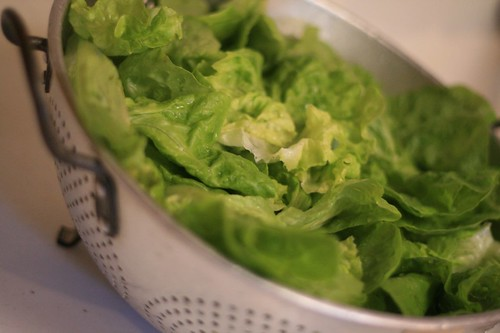 Beautiful butter lettuce draining in a colander
