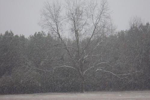 Jan19-08Snowy Trees