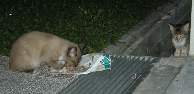 Bambi_Sarsi_20080321_02x