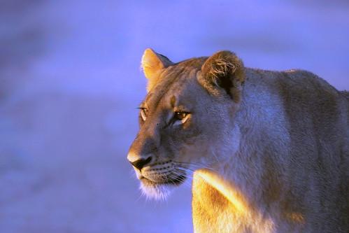 Anglo American sponsors Kruger National Park