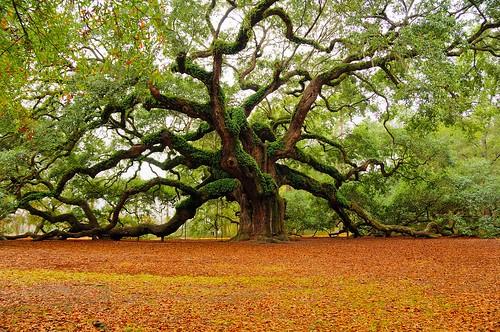 Ancient Tree Of Life