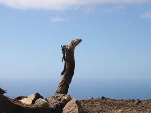 Stöckchen auf Gomera