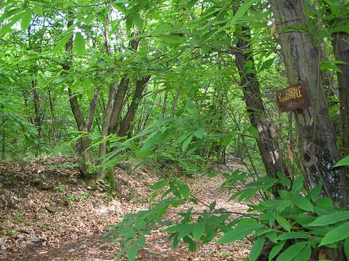 Avvicinamento nei boschi