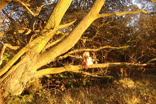 Orinoco in a tree in the late-afternoon sun.