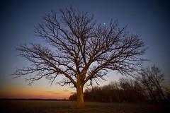 The Tree 46