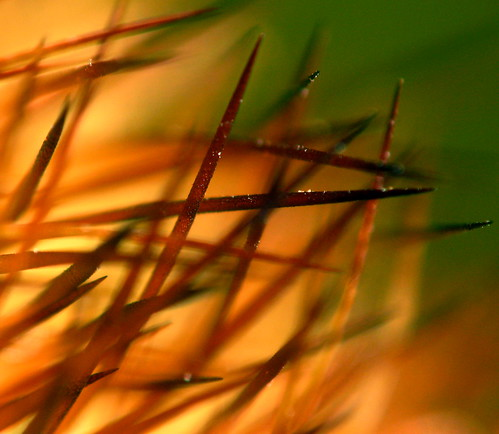 Cactus Needle Bokeh by kevindooley
