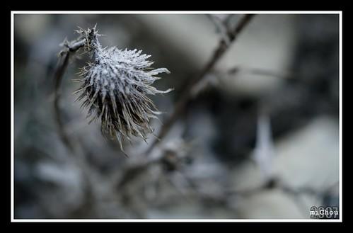 Ţeposul de gheaţă