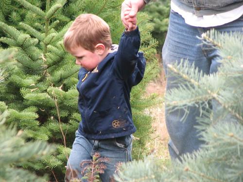 Jacob on the tree hunt