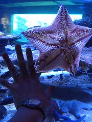 Hand on Star
