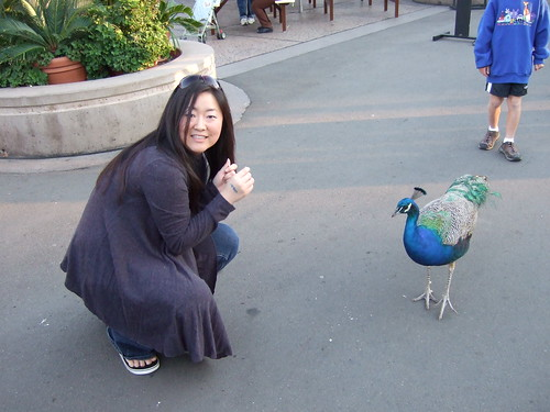 Hungry Peacock