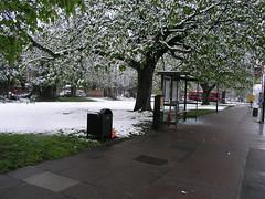 Snow in London, April 6, 2008