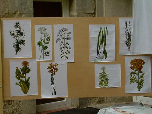 Pati Petits Botànics