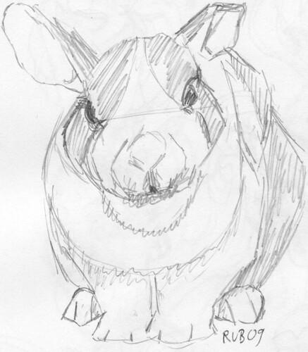 Rabbit shot