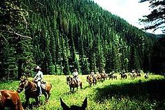 horseback trail ride
