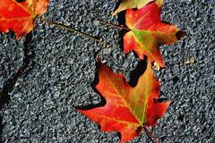 fall, upstate