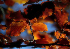 Autumn colors - autumn leaves / Colors de tard...