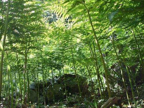 El pequeño bosque de helechos