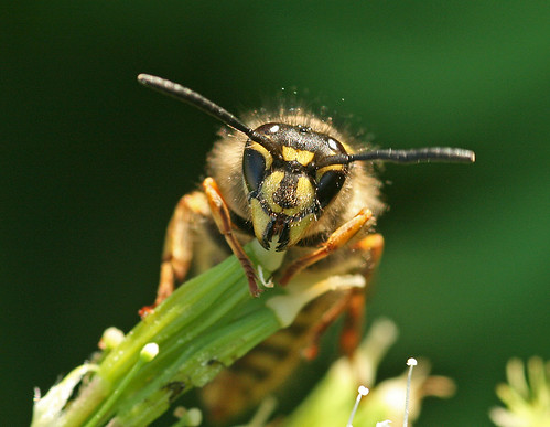 Face to face with a wasp