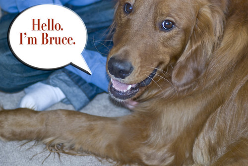 Bruce4