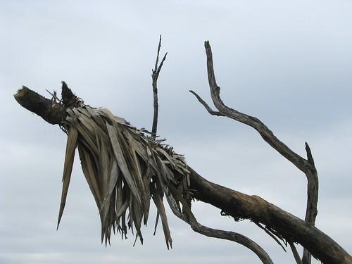 2008-02-11_Rodden Island 077