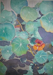 Nasturtiums in June