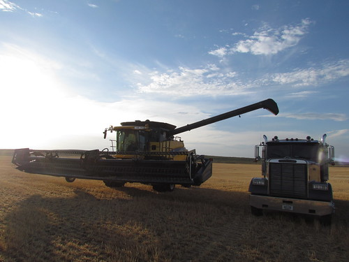 Harvest in Arnett, Okla.
