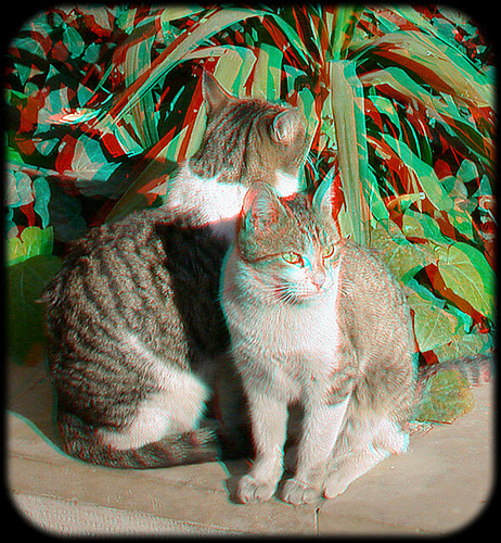 Cats Anaglyph 3D اناگلیف