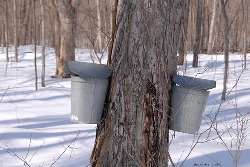 Sap Buckets by Jim Sorbie