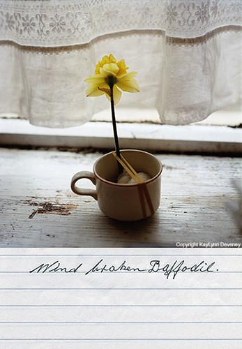 brokendaffodil.jpg
