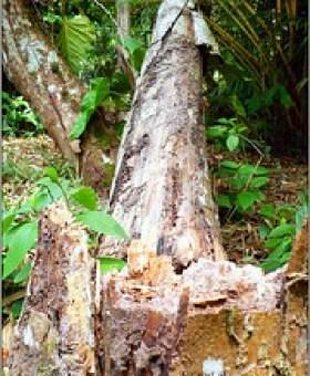 Desmataram na Amazônia o equivalente ao Rio de Janeirro em apenas um mês