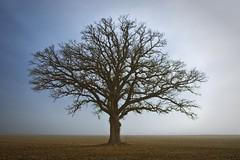 The Tree 43