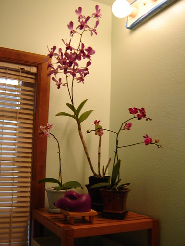 orchids in the bathroom by orchideenoire.