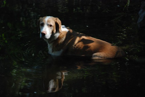 Lucy in the Pond