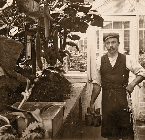 Grampa in the Greenhouse