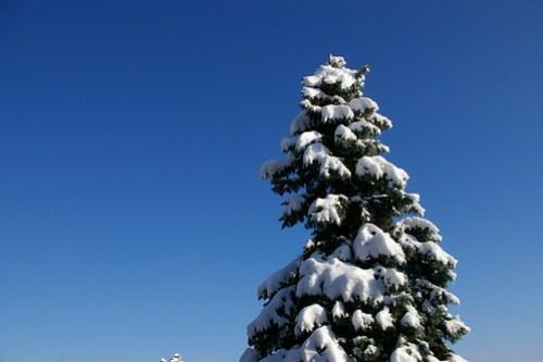 (STS) Sky Tree Snow