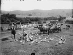 A farm homestead