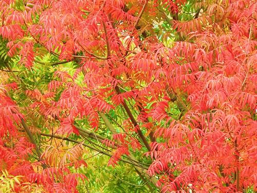 Fall leaves. by aresauburn™.