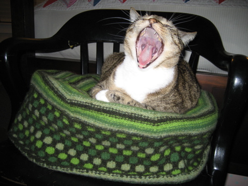 * ROFL - how could I resist this picture?!  Adorable cat bed!  :D