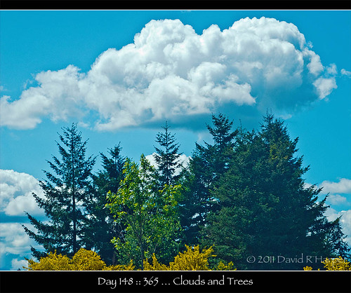 Day 148 :: 365 … Clouds and Trees by Echo9er