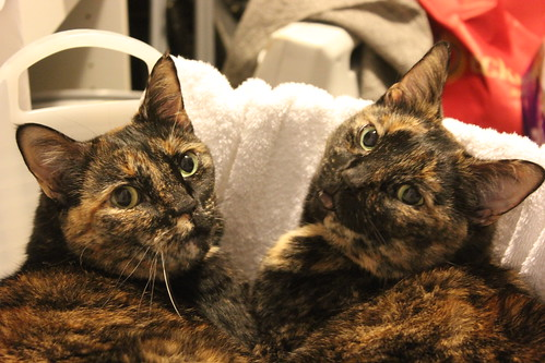 Two-headed cat?