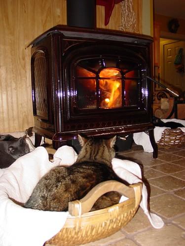 Kitties Roasting by an Open Fire