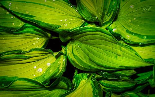 viridis (click to enlarge)