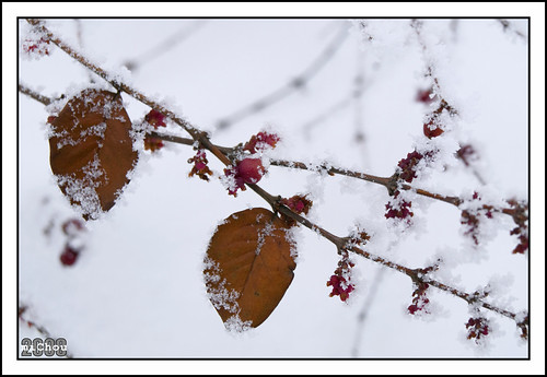 Fruits of the winter
