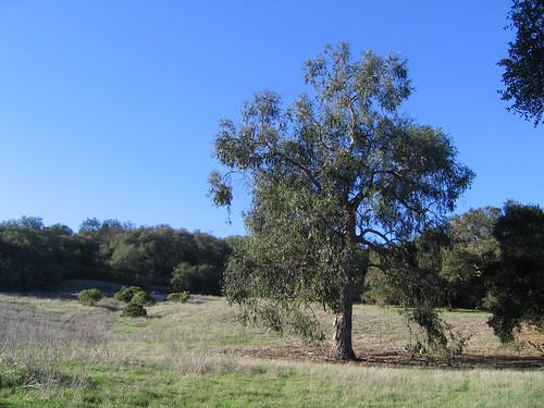 Oak & grassland