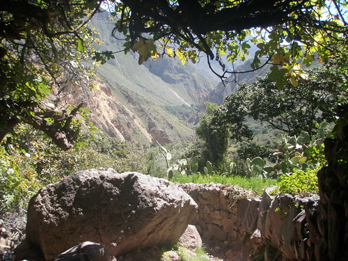 Colca Canyon Walkin'