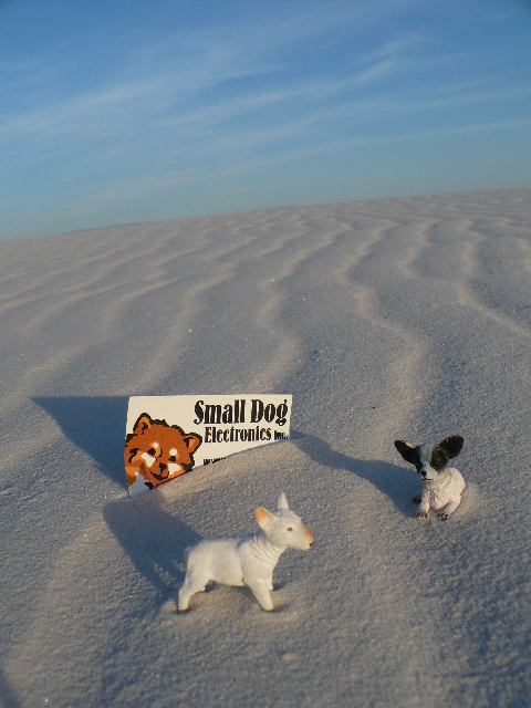 Small Dog in White Sands National Monument.