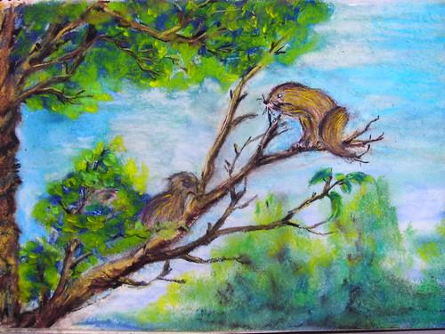 明和_松鼠