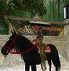 Ridem cowgirl