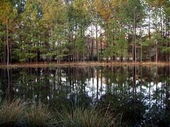 Fordham's Pond